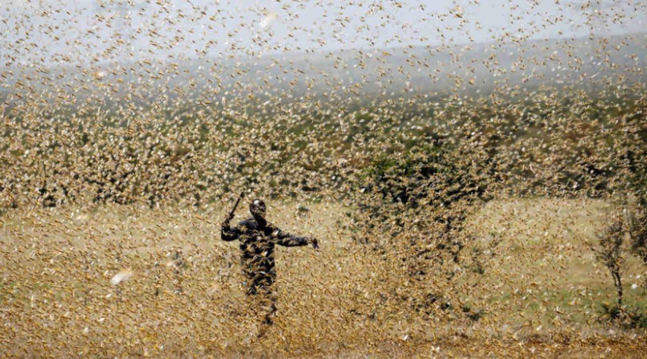 Grasshopper cloud has not formed since 1960